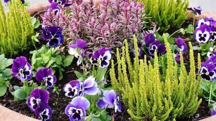 Mi a különbség az egynyári és kétnyári dísznövények ültetésében és gondozásában?