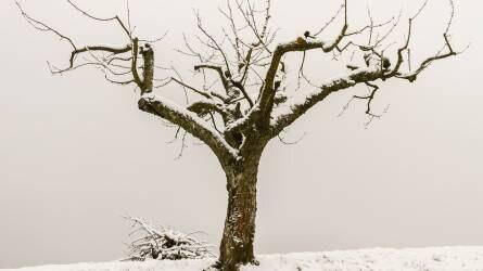 Metszés tavasztól télig I. rész – mit metsszünk télen?
