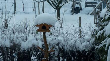 A téli madáretetés aranyszabályai
