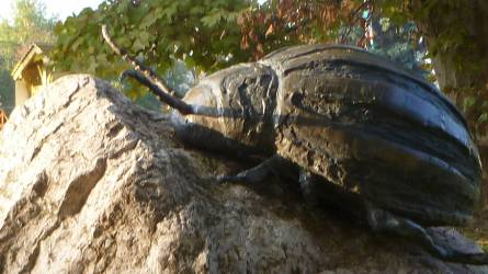 Inváziós kártevők: a burgonyabogár