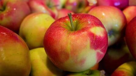 A francia almatermesztőket is hátrányosan érinti az olcsó lengyel alma