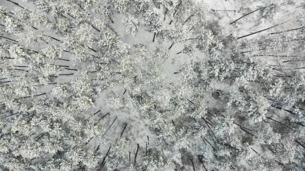 Csodálatos téli légifotók - Havas erdők, mezők és legelők madártávlatból