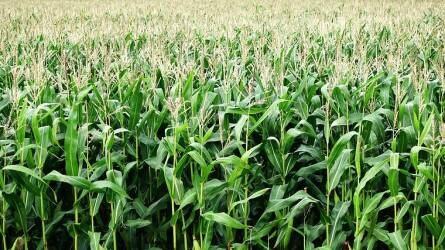 """AgroFIELD Akadémia Konferencia – Dr. Robert L. Nielsen, a """"Corn Guy"""" Magyarországon! – Videó"""
