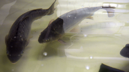 Tovább fejlődhet az akvakultúra ágazat