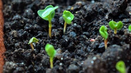 Felfutóban a mikrozöldek (microgreens) termesztése