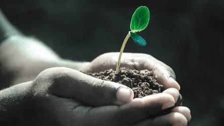 Növénykondicionáló készítmény engedélyét függesztették fel