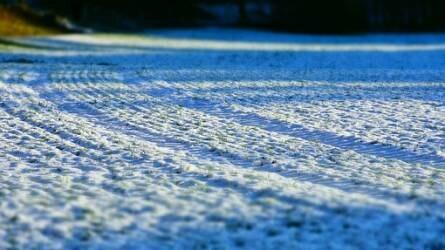 Időjárás: ideális körülmények között telelnek az őszi vetések