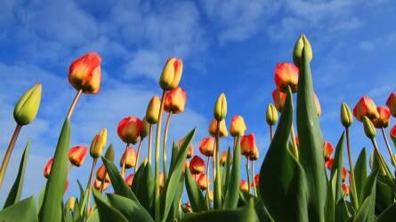 A megfelelő növényt a megfelelő helyre! I. rész – a talaj kémhatása