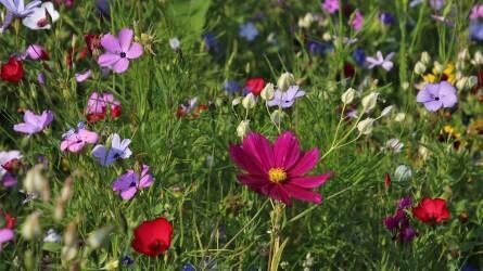 A megfelelő növényt a megfelelő helyre! II. rész – a talaj fizikai félesége