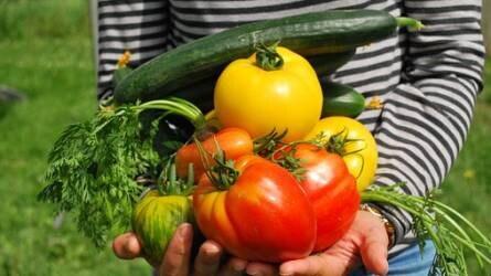 Utolsó helyen állunk az EU-ban a napi zöldségfogyasztás tekintetében
