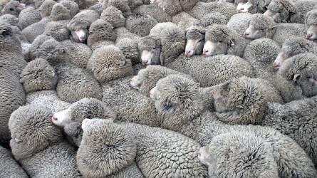 Hosszú távon nőhet az uniós juhhúsfogyasztás