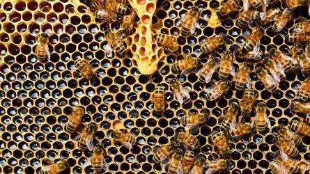 Csekély összegű támogatást kaphatnak a méhészek