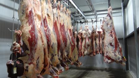Csehország nem bízik a lengyel marhahúsban