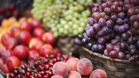 Gyümölcstermesztési tapasztalatok Görögországban