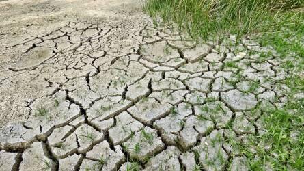 A kalászos gabona 30 százaléka veszhetett kárba az aszály miatt