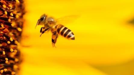 Amikor az 1+1 nem 2, avagy a rovar- és gombaölő szer tankkeverékek hatása a méhekre