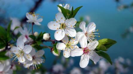 Rengeteg a tenni való a gyümölcsösben - ha szüretelni is akarunk