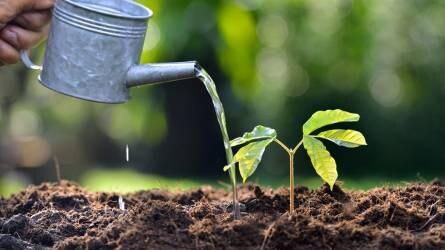 Tápoldatozás a növény szabályozásának egyik fontos kulcsa