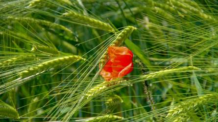 Kitekintés: a magyar agrárágazat helyzete