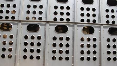 Információk a rendezetlen Brexit esetén használandó állategészségügyi exportbizonyítványokról
