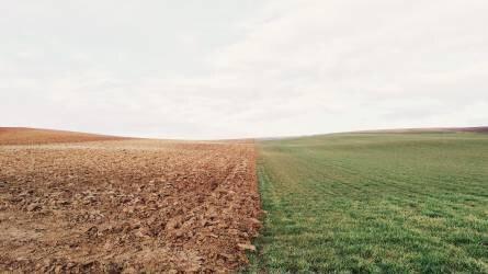 Tudatos talajhasználat és a talajok szervesanyag-gazdálkodása (2.)