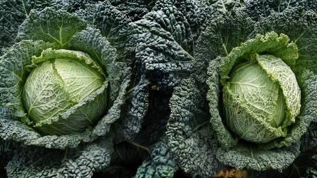 Fejeskáposzta-palánták integrált szemléletű táplálása
