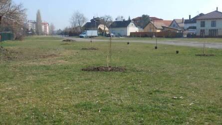 Ehető közkertek, avagy agrár-erdészet a városban? - Egy közösségi kezdeményezés Budapesten