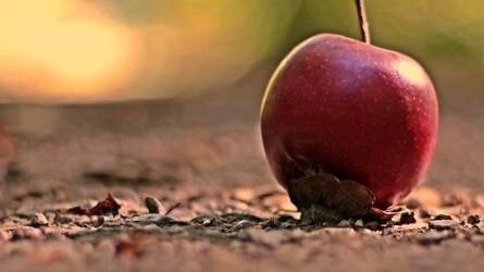 Mit tehetünk a gyümölcshullás ellen?