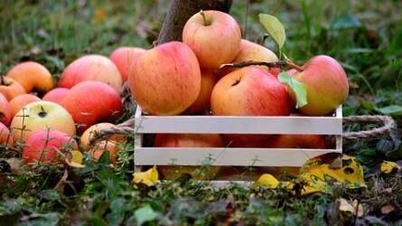 Európai Friss Kalandok: ösztönözni kell a zöldség- és gyümölcsfogyasztást