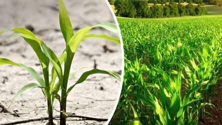 Miért is fontos csapadékmentes időszakban a talajbaktérium készítmények használata?