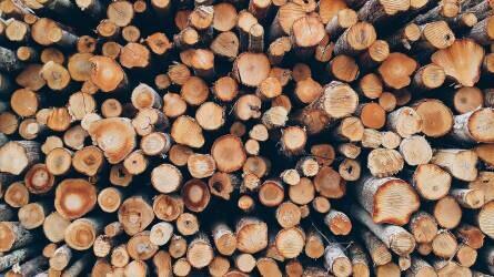 Kizárólag szállítójeggyel lehet erdei faválasztékot szállítani