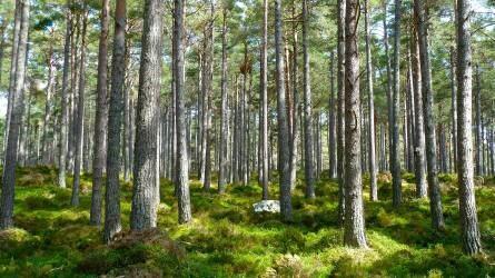 Az aszály több mint százezer hektár erdőt pusztított ki Németországban tavaly óta