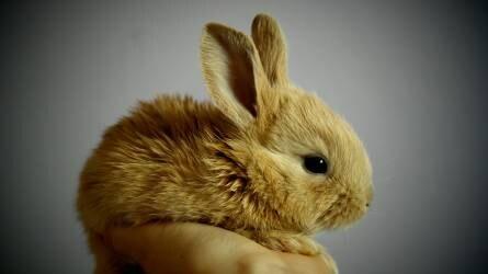 Húsvét: a megúnt nyúl szabadon engedése bűncselekmény!