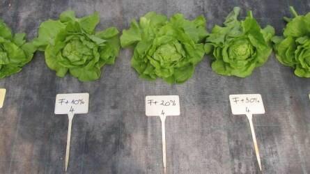 Földkeverék-újdonság a zöldségnövények számára!
