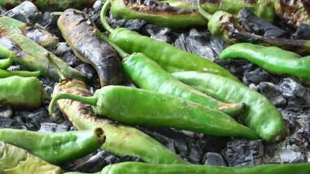 Fűszerpaprika-termesztés és -kutatás Tunéziában