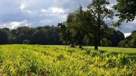 Katasztrófához vezethet, ha tovább csökken a biodiverzitás