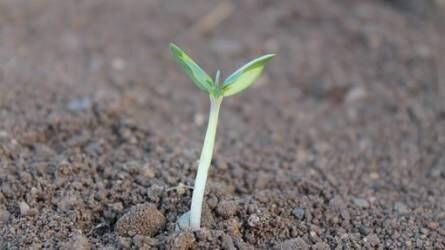 Alba Milagro Hungária Kft. - professzionális partner a növénytáplálás és talajaktiválás területén