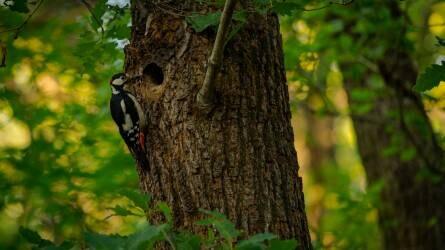 Közel 700 madárodút helyeztek ki az erdőkben
