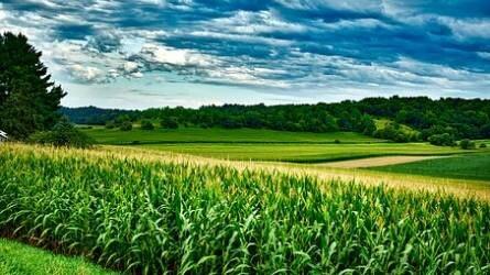 Minden, amit a termelő szeretne - Rugalmas megoldás, széles hatásspektrum, kedvező hektárköltség kukoricában