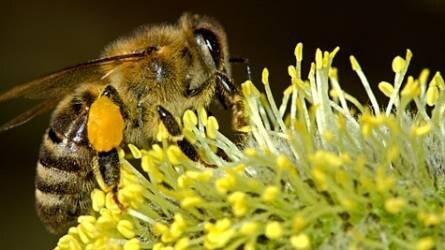 A méhlegelőkről - az élettér csak összefogással javítható
