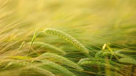 A mezőgazdaság jövője is az európai parlamenti választások tétje