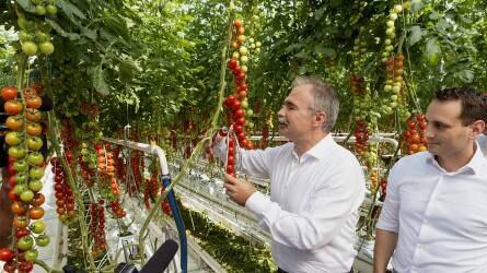 Paradicsomot termelő üvegházat adtak át Győrben
