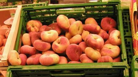 Spanyolország gyümölcstermesztése – Régiónkénti választék / Szubtrópusi fajok (2/1.)