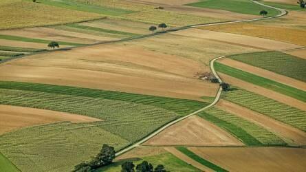 Kevésbé drágultak tavaly a termőföldek -  a szőlő és a gyümölcsös a legdrágább