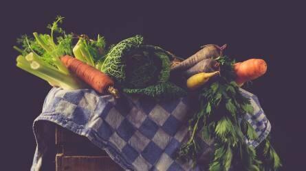 Kézimunkaerő-szükséglet csökkentésének lehetőségei a zöldségtermesztésben