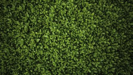 Miből legyen sövény? II. rész – lombhullató sövénynövények