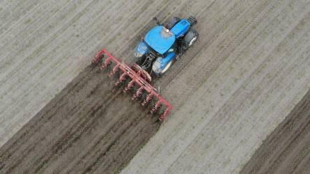 Mechanikus gyomirtás kukoricában - Nyolcsoros kultivátor a bácsai földeken