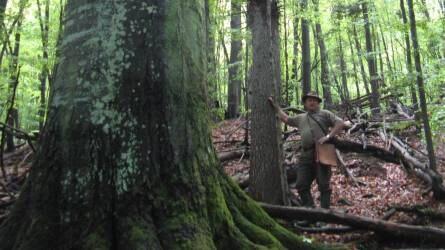 Őserdőben jártunk – a Badínsky erdő