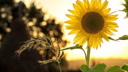 Integrált növényvédelem a házikertben – a gyakorlat