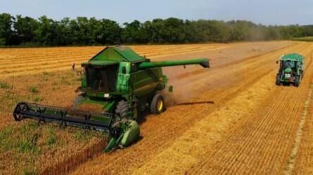 """""""Óriási rizikó a gabonatermesztés"""" - Így aratták le az őszi búzát Tolnában"""